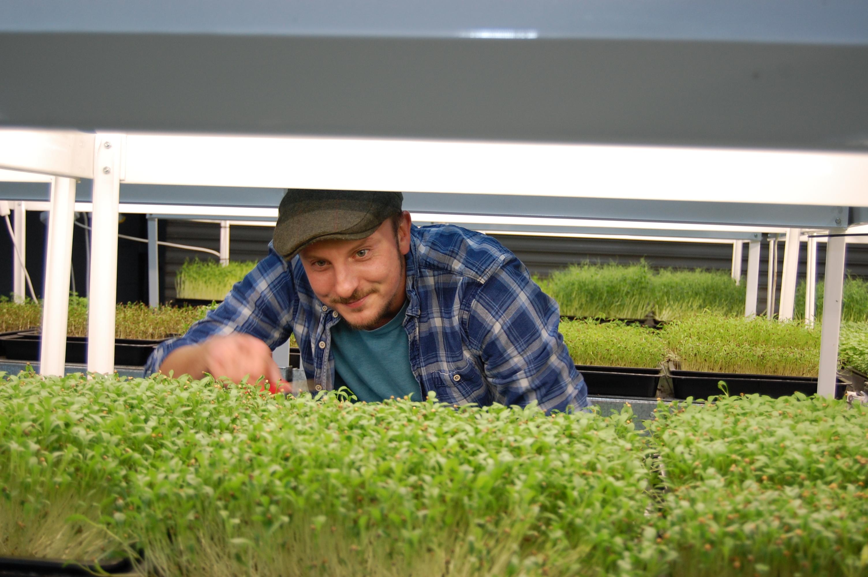 Microherbs, Microgreens, Ben Wild, Yorkshire Farming
